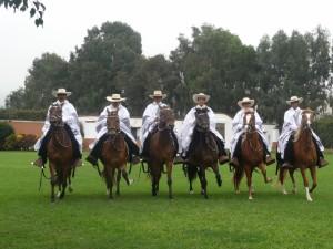 Peruvian-Paso-Horse-300x225